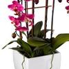"Dahlia Studios Potted White Ceramic 29"" High Faux Fuchsia Orchid - image 4 of 4"