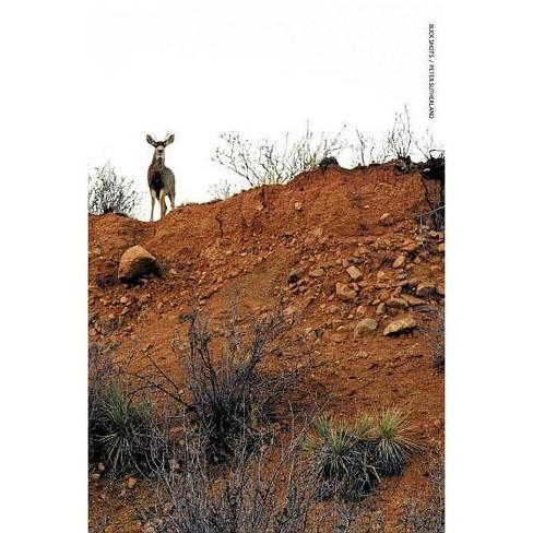 Buck Shots - (Paperback) - image 1 of 1