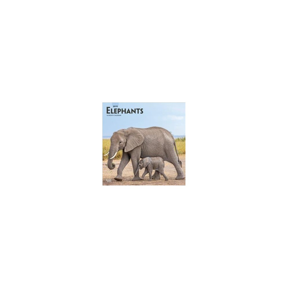Elephants 2019 Calendar - (Paperback)