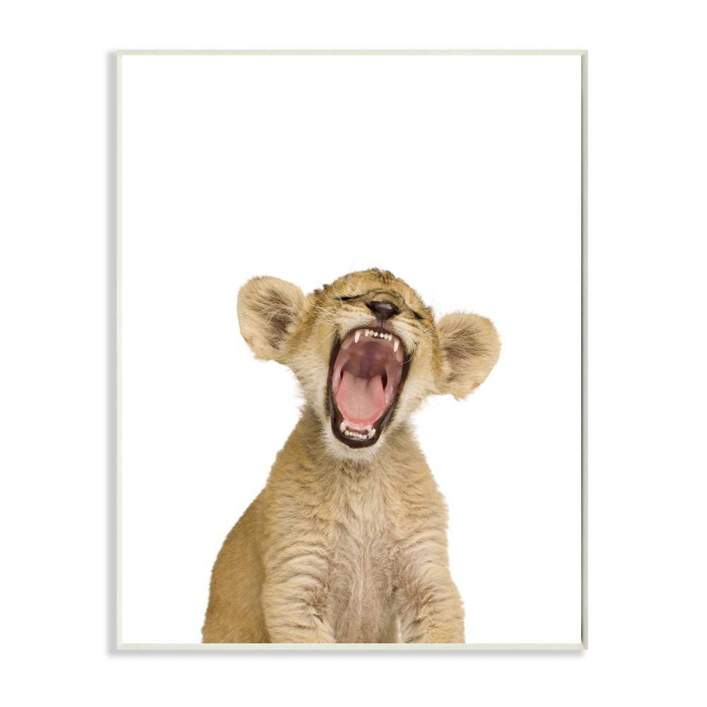 "Image of ""10""""x0.5""""x15"""" Baby Lion Cub Studio Photo Wall Plaque Art - Stupell Industries"""