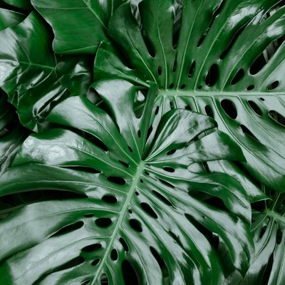 3pc Swiss Cheese Plant - National Plant Network