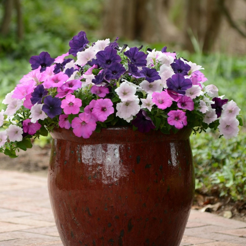3pc 3 in 1 Wave Petunia Collection - Cottage Hill, Purple/Green/Silver