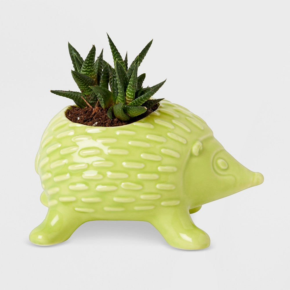 Image of Hedgehog Mini Tabletop Planter Green - Kid Made Modern