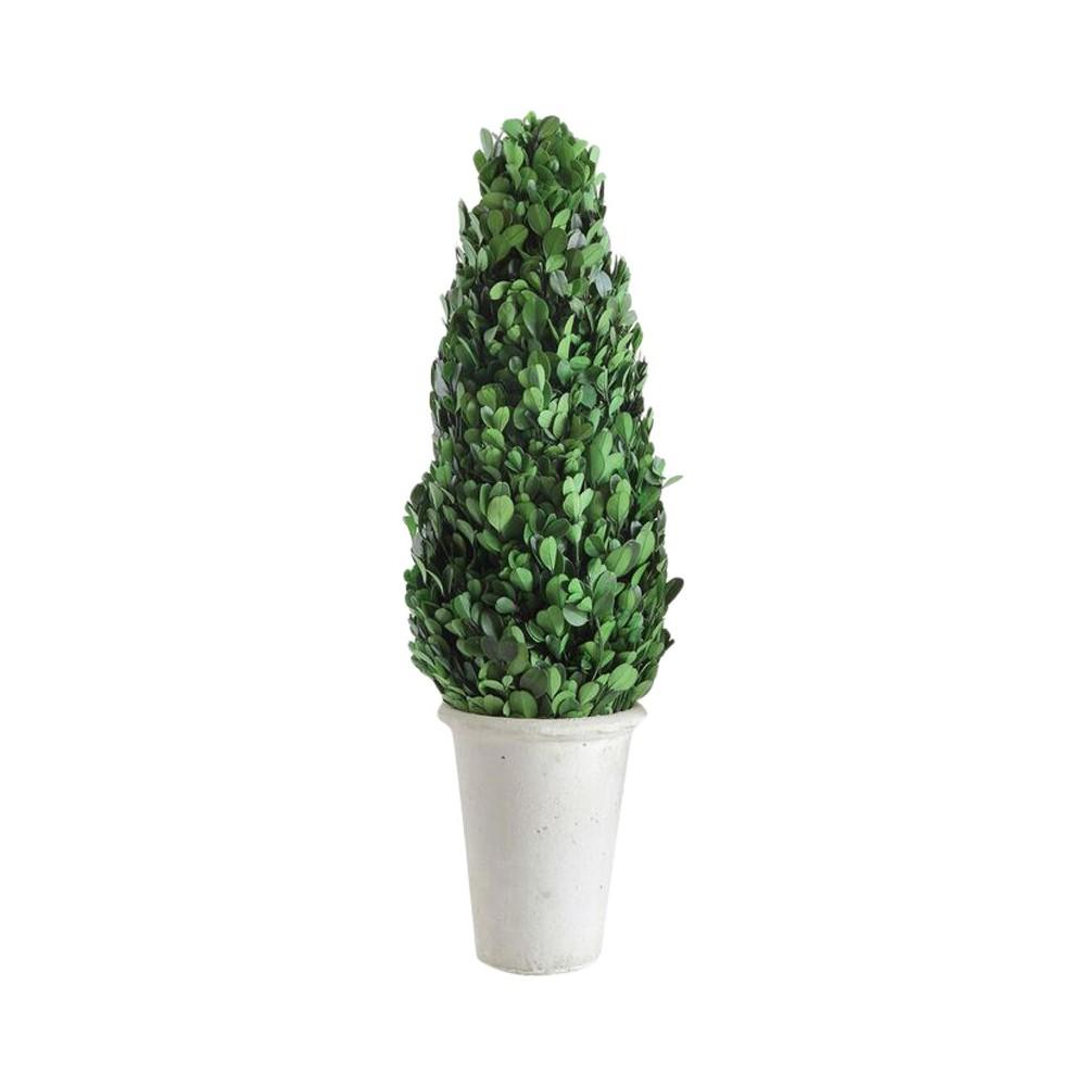Image of Boxwood Cone Topiary - 3R Studios, Green