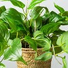 Faux Pothos Leaf Hanging Plant - Hearth & Hand™ with Magnolia - image 3 of 4