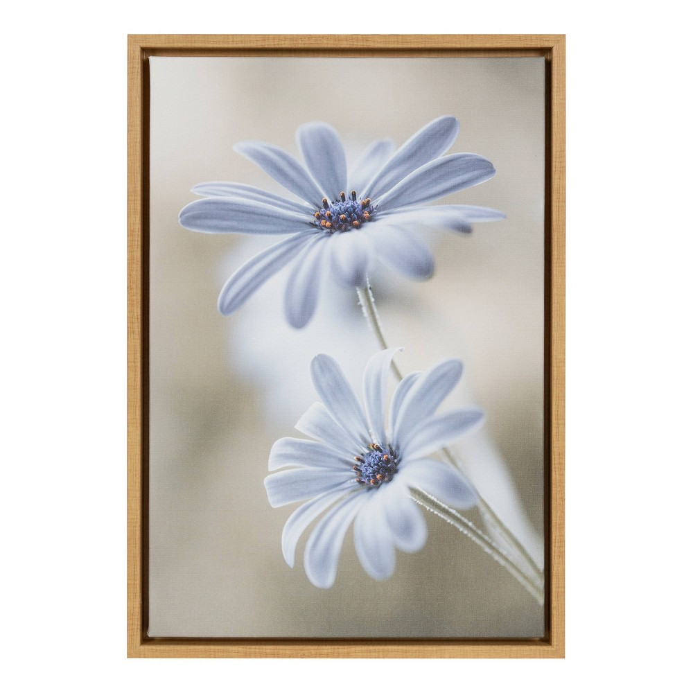 """Image of """"16"""""""" X 23"""""""" Cape Daisies By Mandy Disher Maple - Amanti Art"""""""