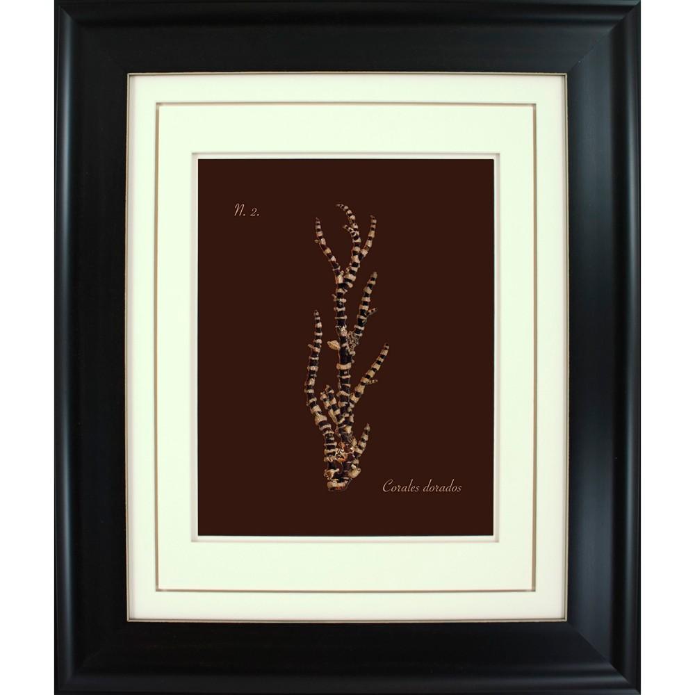 19 5 34 X 23 5 34 Gold Corals Picture Framed Black Ptm Images