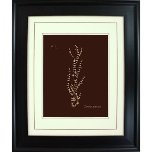 'Corals Dorados Wall Art - 16x20'', Black Brown'