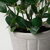 """7.5"""" Mini Faux Bean Potted Plant - Hearth & Hand™ with Magnolia - image 3 of 3"""