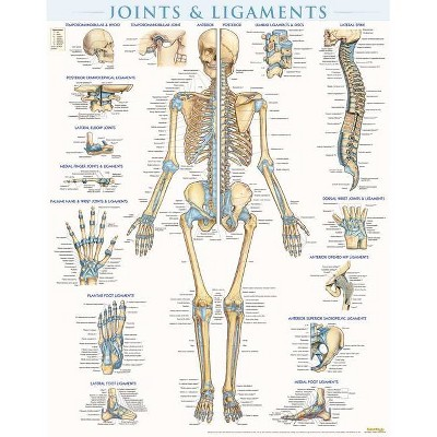 Joints & Ligaments Poster (22 X 28 Inches) - Laminated - by  Vincent Perez