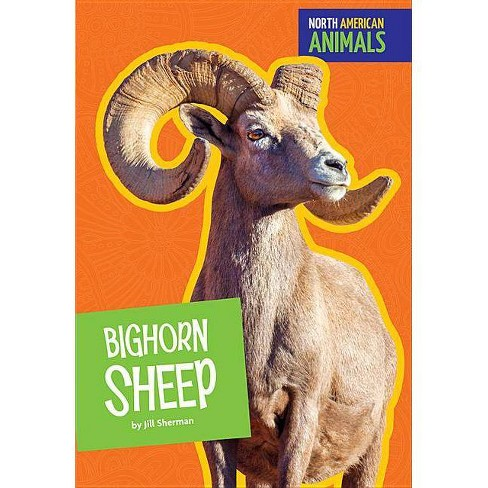 Bighorn Sheep - (North American Animals) by  Jill Sherman (Paperback) - image 1 of 1
