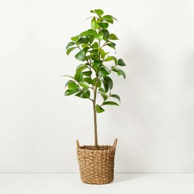 """65"""" Faux Audrey Ficus Tree in Planter - Hearth & Hand™ with Magnolia"""