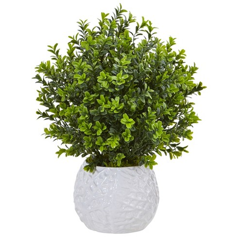 Boxwood Evergreen Artificial Plant In White Vase - Nearly Natural - image 1 of 3