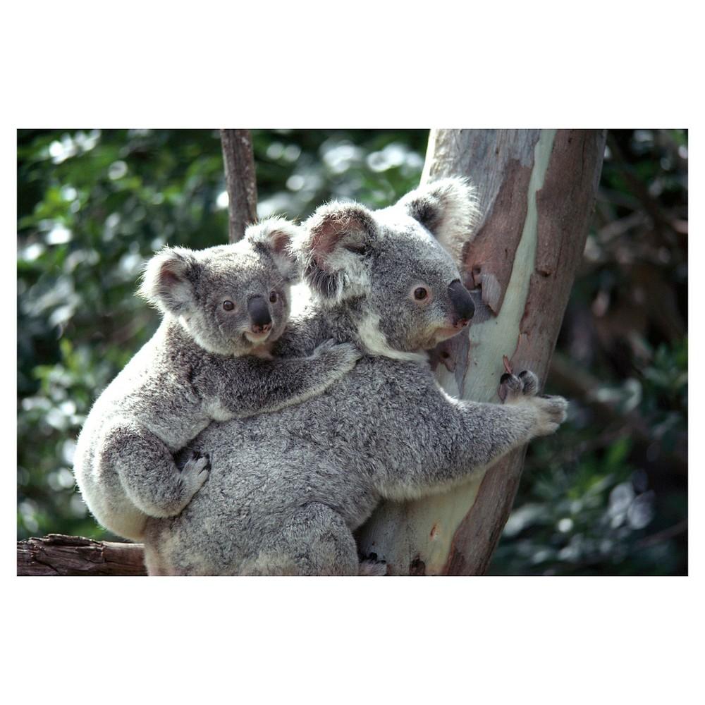 Image of National Geographic Koala Bears Poster - Brown/Green