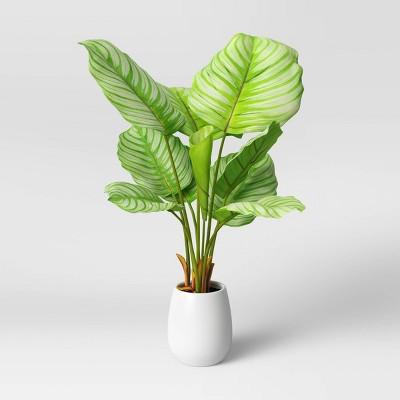 Faux Large Arrowroot in Pot White - Opalhouse™