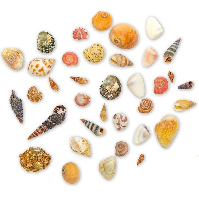 Juvale Tiny Craft Spiral Seashells for DIY Crafts, Home Decor (0.4-1 Inches, 180 Grams)