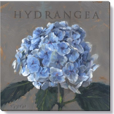 Sullivans Darren Gygi Hydrangea Canvas, Museum Quality Giclee Print, Gallery Wrapped, Handcrafted in USA