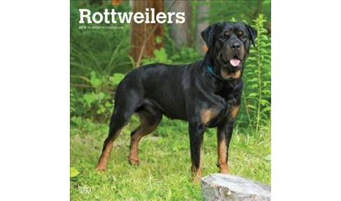Rottweilers 2019 Calendar Paperback Target