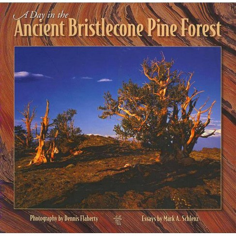 A Day in the Ancient Bristlecone Pine Forest - (Companion Press) by  Mark A Schlenz (Paperback) - image 1 of 1
