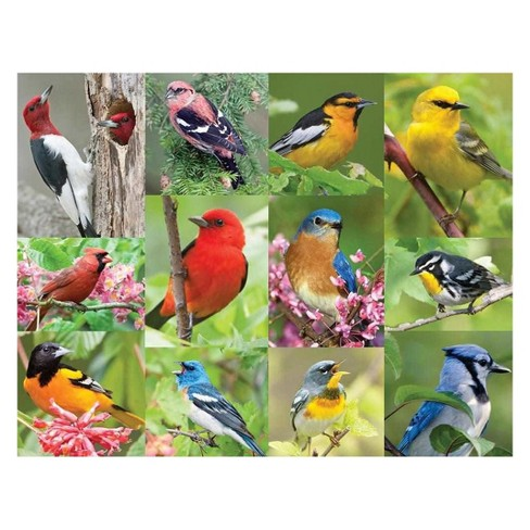 Springbok Birds Of A Feather Puzzle 36pc - image 1 of 2