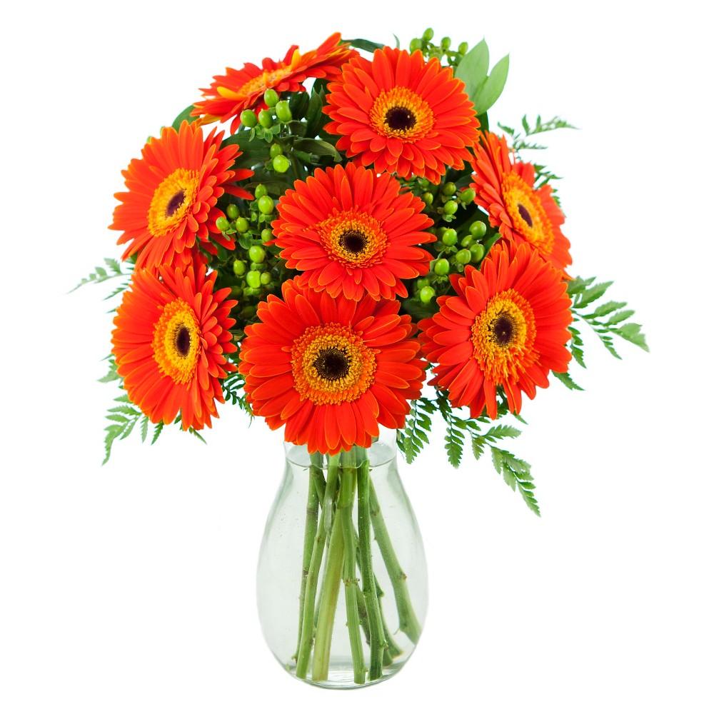 KaBloom Clementine Daisies Fresh Flower Arrangement - with Vase