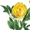 """Nearly Natural 38.5"""" Peony w/Leaves Stem (Set of 12) - image 4 of 4"""