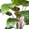 """39"""" x 24"""" Artificial Rojo Congo Plant in Ribbed Ceramic Pot White - Hilton Carter for Target - image 2 of 3"""