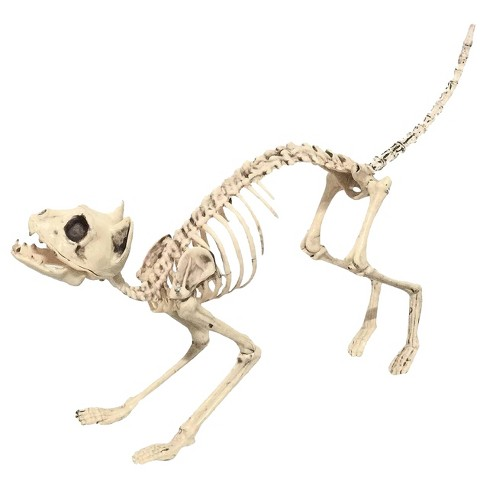 Halloween Sonic Realistic Skeleton Cat - image 1 of 1