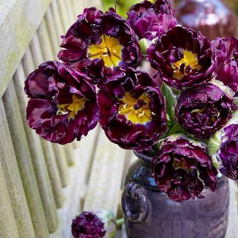 8ct Tulips Wow Bulbs - Van Zyverden - image 1 of 4