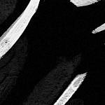 Blush/Black Print