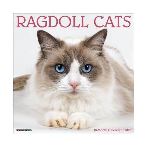 Ragdoll Cats 2020 Calendar Paperback Target