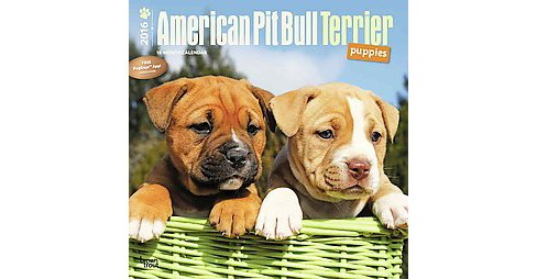 American Pit Bull Terrier Puppies 2016 Calendar (Paperback) - image 1 of 1