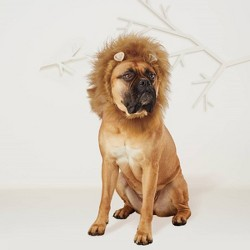 Lion Mane Dog & Cat Costume - Hyde & EEK! Boutique™