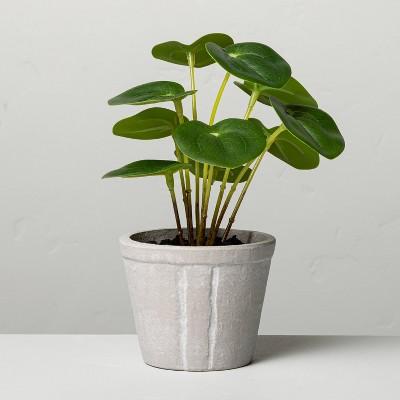 "6.5"" Mini Faux Pilea Potted Plant - Hearth & Hand™ with Magnolia"