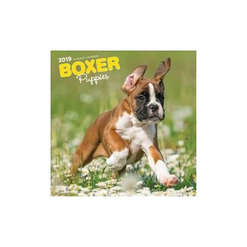 Boxer Puppies 2019 Calendar Paperback Target