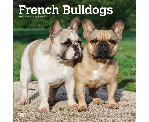 French Bulldogs 2019 Calendar -  (Paperback) - image 1 of 1