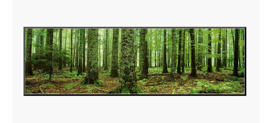 Art.com - Rain Forest