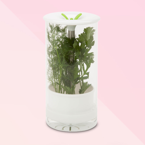 Honey-Can-Do Glass Herb Preserver