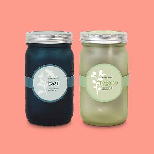 Modern Sprout Glass Jar Grow Set - Basil + Cilantro