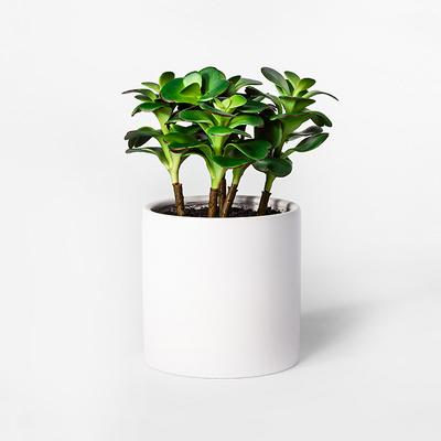 "10"" x 7"" Artificial Jade Plant Succulent In Pot Green/White - Project 62™"