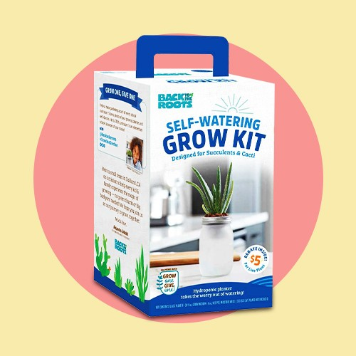 Back to the Roots Hydroponic Succulent & Cactus Grow Kit, Back to the Roots Kids' Science Grow Kit - Bean