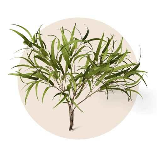 """24"""" Preserved Willow Eucalyptus Stem Green - Threshold™"""