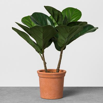 Faux Fiddle Leaf Plant in Terracotta Pot - Hearth & Hand™ with Magnolia
