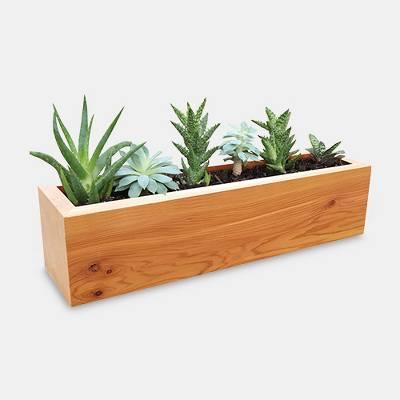 Succulent Planter Rectangular Western Clear Oil Finish - Red Cedar - Gronomics