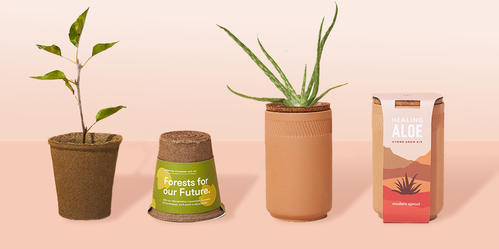 Modern Sprout Terracotta Grow Kit - Aloe, One for One Tree Kit - American Sycamore
