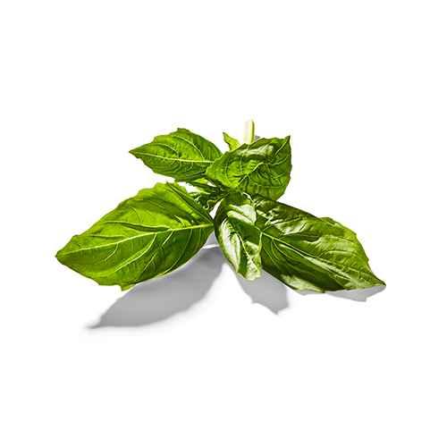 Organic Basil - 0.5oz - Good & Gather™, Organic Basil - 0.75oz Package