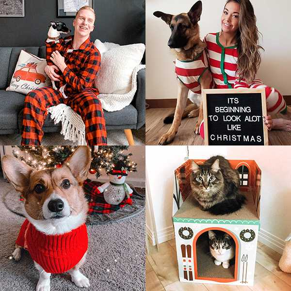 All the ways to get your fur babies in the holiday spirit.