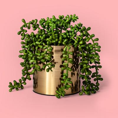 "7"" x 6.5"" Artificial String of Pearls Succulent in Pot Green/Gold - Project 62™"