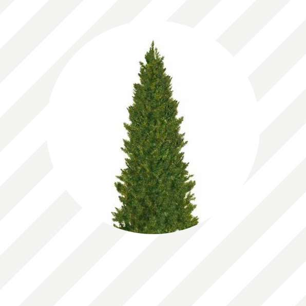 trees under 100 - Cheap Christmas Trees Online