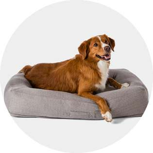 Outstanding Dog Beds Target Squirreltailoven Fun Painted Chair Ideas Images Squirreltailovenorg